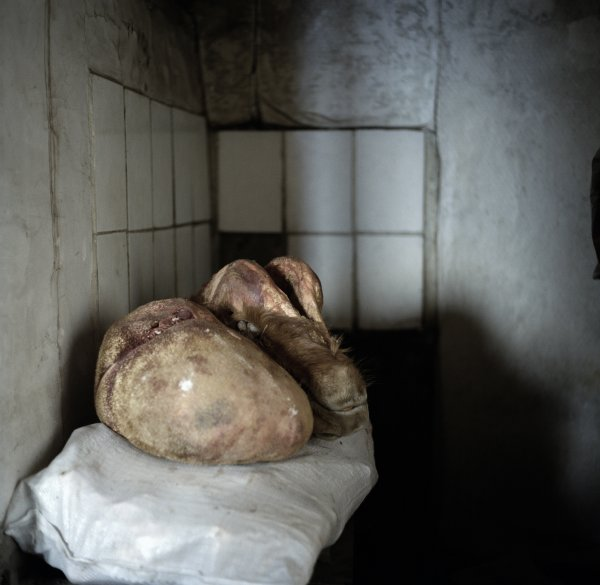 Animal head and stomach stored in a cold room.   Yurt neighbourhood of Sükhbaatar, Ulan Bator, December 2011.