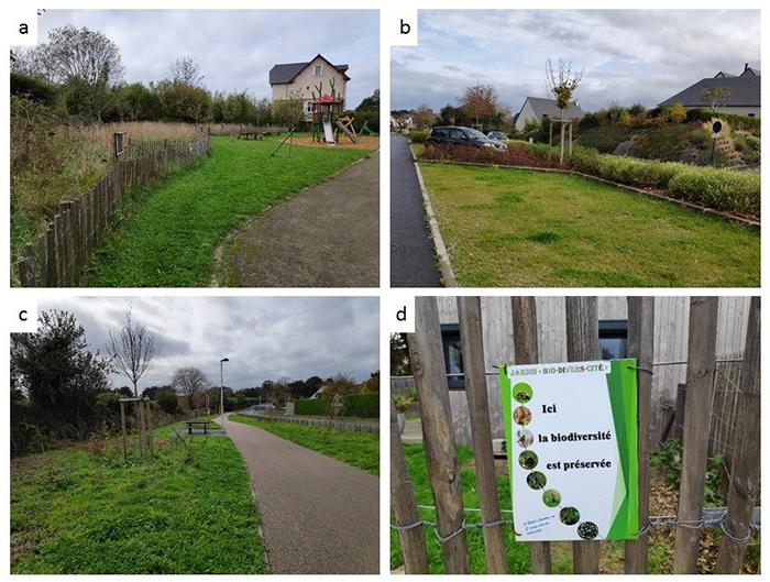 Pourquoi et comment favoriser la spontanéité écologique en ville ?